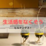 生活感&食材のロスをなくす収納ワザ【ヒルナンデス!】
